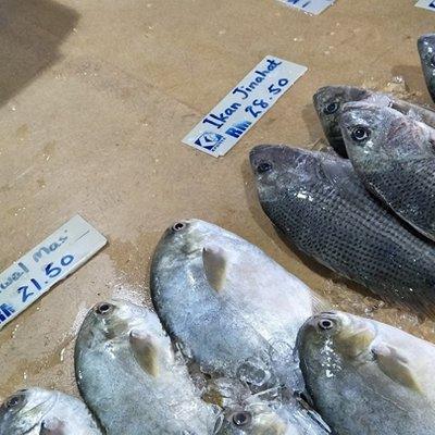 Harga Ikan Jenahak Bawal Emas Dan Siakap