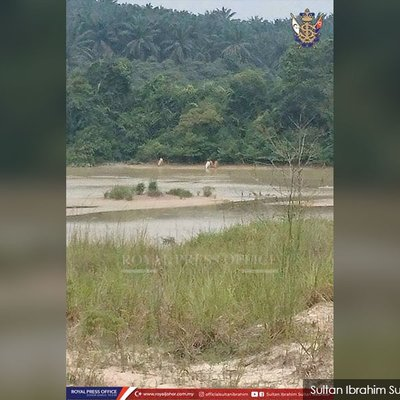 If You Hunt You Will Be Hunted Johor Sultan S Warning To Poachers