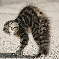 Image result for kucing nampak hantu