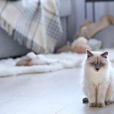 Manggil Puss Sudah Terlalu Biasa Yuk Pilih Satu Dari 60 Nama Kucing Beserta Maknanya