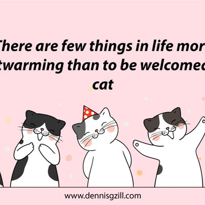 Meow Meow Cat With Quotes