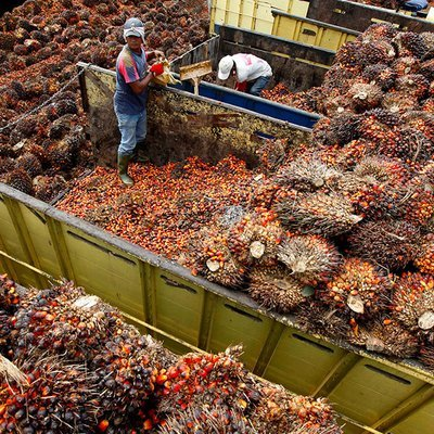 New Twist To Malaysia India Palm Oil Issue