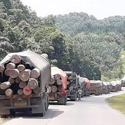 Opposition Leader Claims Massive Illegal Logging Taking Place In Sapulut