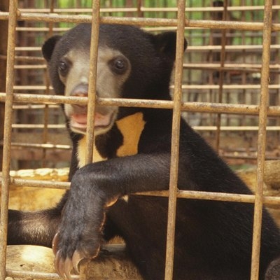 Perhilitan Arrests Man For Keeping Sun Bear And Protected Birds