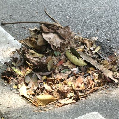 Road Users Puzzled Drains On Jalan 16 1 Stuffed With Dried Leaves