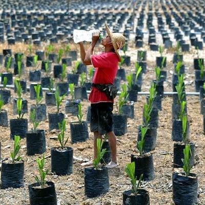 usahakan tanah tidak diusahakan bersama felcra bung moktarMiesya Tanah Merah Pandai Melukis #19