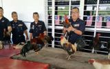 Farmer Nabbed At Cockfight 9 Caught At Sepak Takraw Game