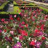 Keindahan Tulip Dari Holland Park Kensington London