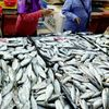 Penang Seafood Safe For Consumption Says Exco
