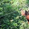 Yoursay Malaysia Should Tell A Better Story About Our Palm Oil Industry