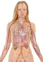 trombózis, visszértágulat