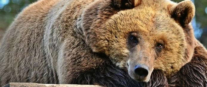 Móric, a medve