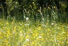 allergén immunterápia