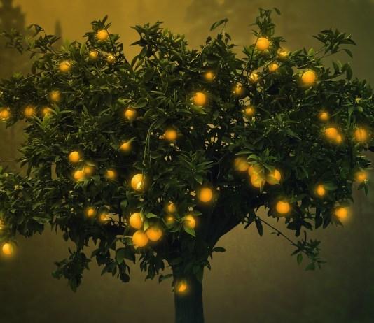 Skolik Ágnes mesedélután - A csodatermő fa