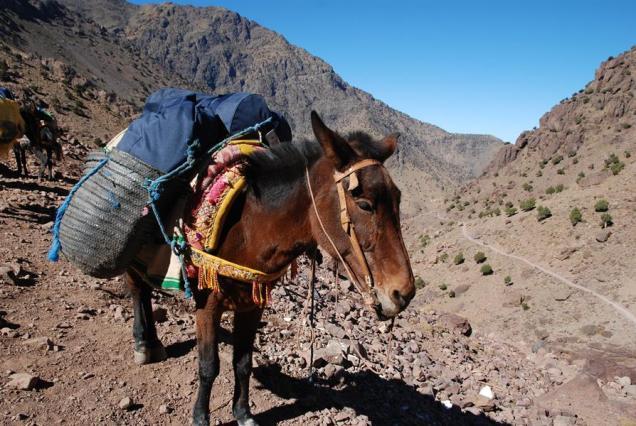 Maroko_Jebel_Toubkal_108