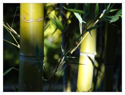 morocco_fez_jnane_sbil_garden_15