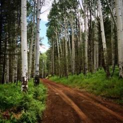 Hike-Flagstaff-Babbitts-Dirt-Road-Aspen-Trees