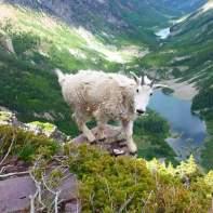 Hike-Flagstaff-Babbitts-Goat-1