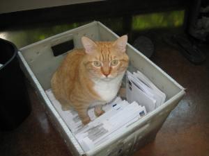 2008 Cat in the bag (5)