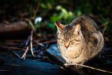 Cat-photography-Seiji-Mamiya31