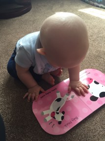 TM reading & touching a page with a cow and calf on pink background
