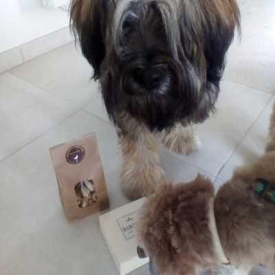 oprah-nemo-terrier-du-tibet-friandises-naturelles-pour-chien