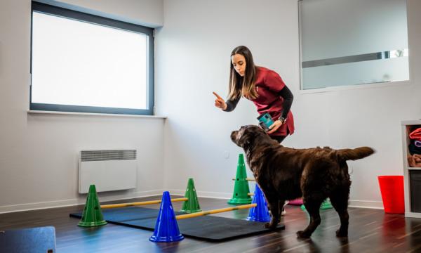 cabinet-veterinaire-physioveto-elsa-llerena-babouchkatelier- (35)