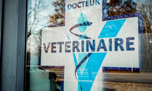 cabinet-veterinaire-physioveto-elsa-llerena-babouchkatelier- (66)