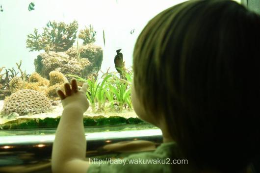葛西臨海水族館 3歳 年少 幼稚園