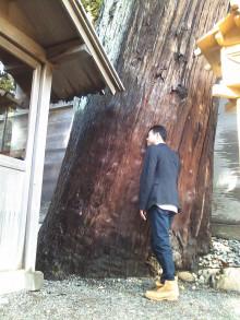 伊勢神宮の大きな木