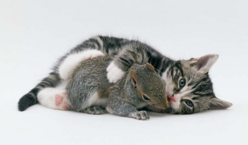 Squirrel and Kitten Play
