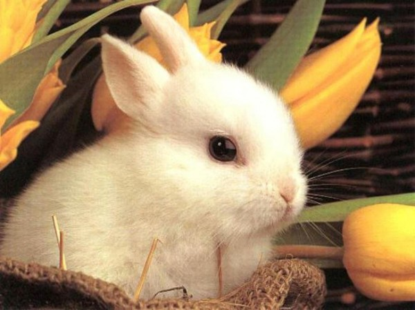 Easter Bunny Edition Baby Animals