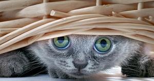 Whatcha Doing?  Kitten under a basket.