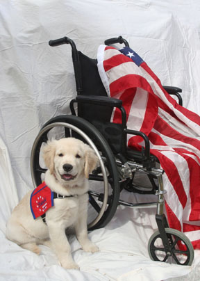 Patriot Service Dog