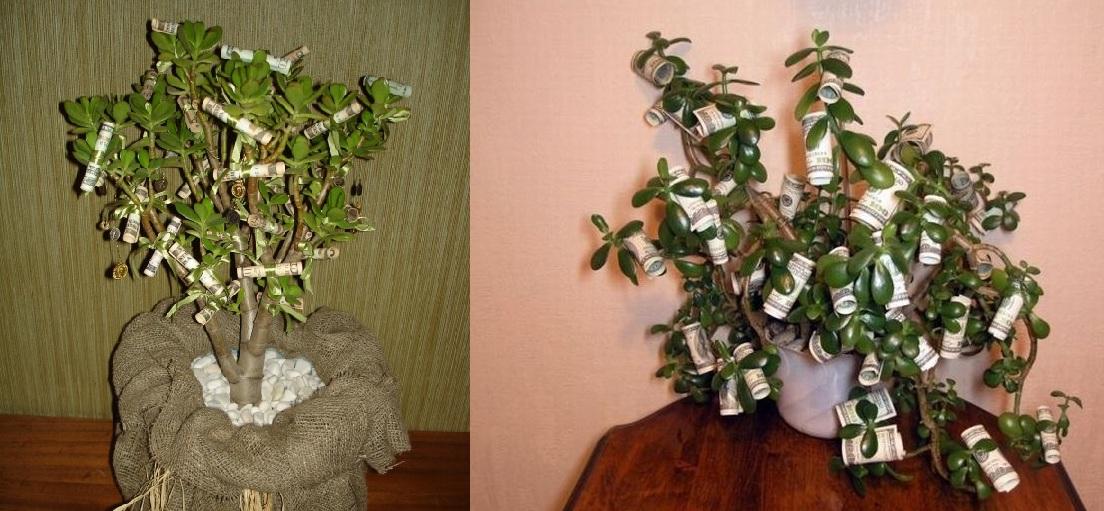 поздравления с днем рождения мужчине денежное дерево хочу, чтоб