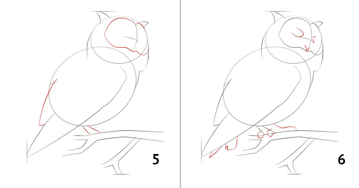 Рисунки карандашом сова поэтапно привычек девушка