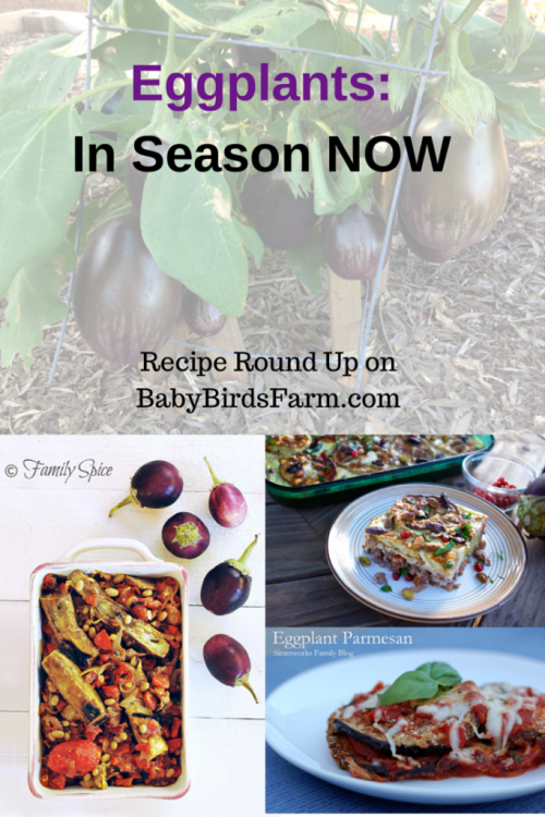 Eggplant Recipes: In Season NOW