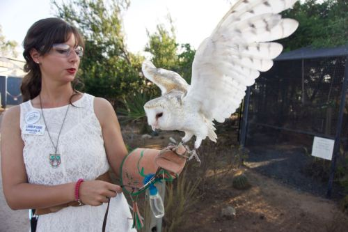 Rescued and rehabilitated barn owl - Living Coast Discovery Center