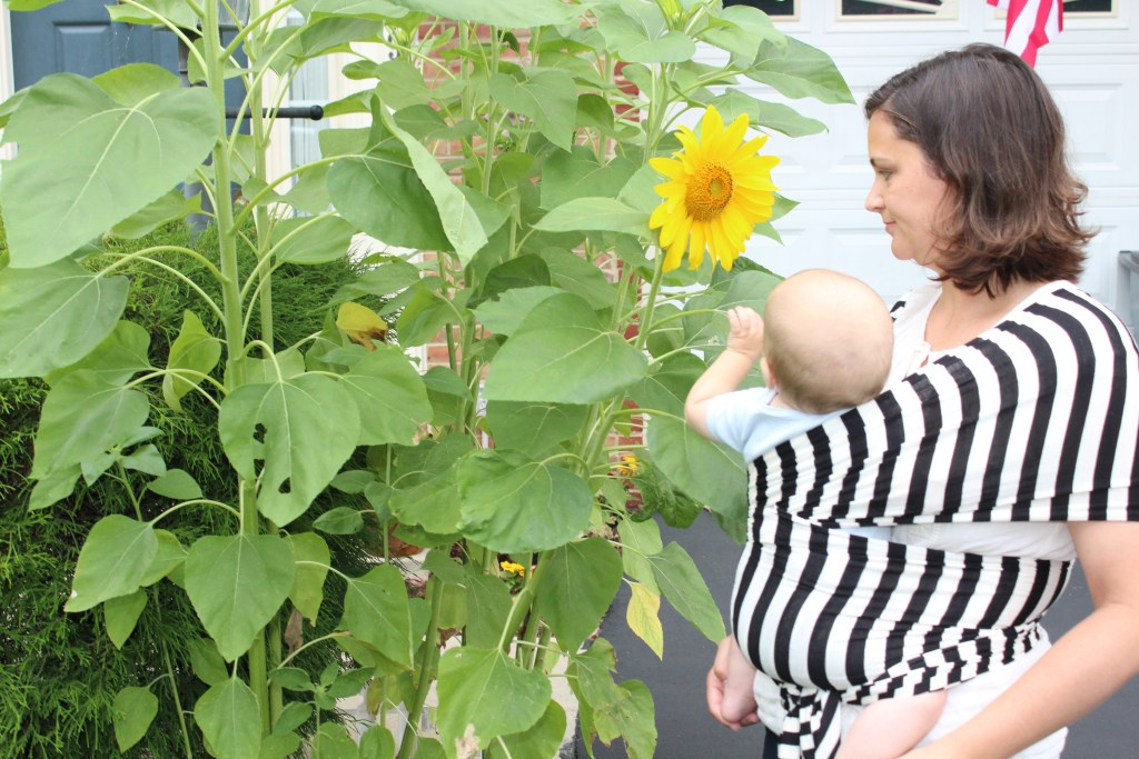 Baby wearing wrap sunflower