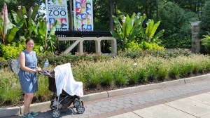 Things to do with baby: Zoo