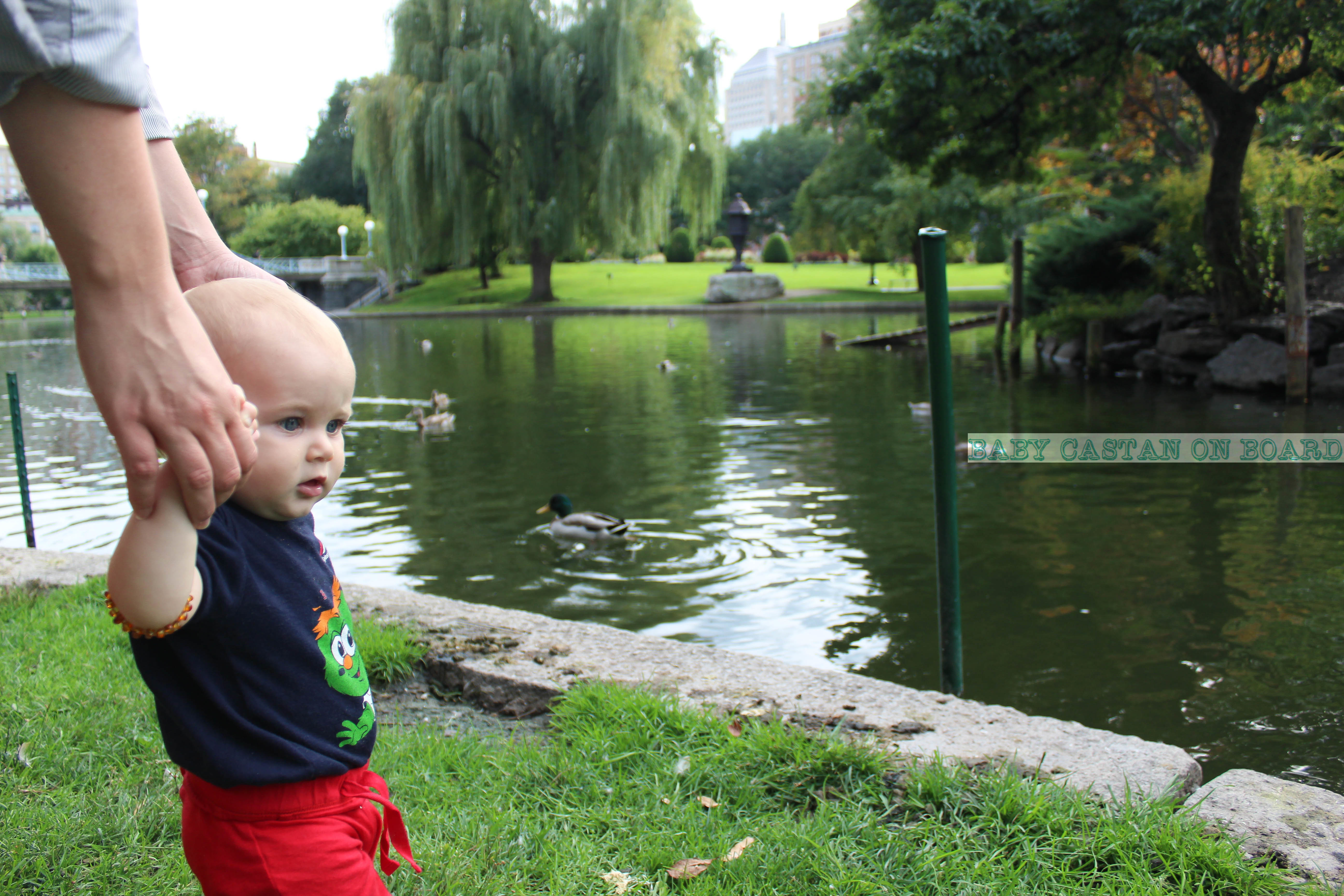 things-to-do-with-baby-in-boston-ducks