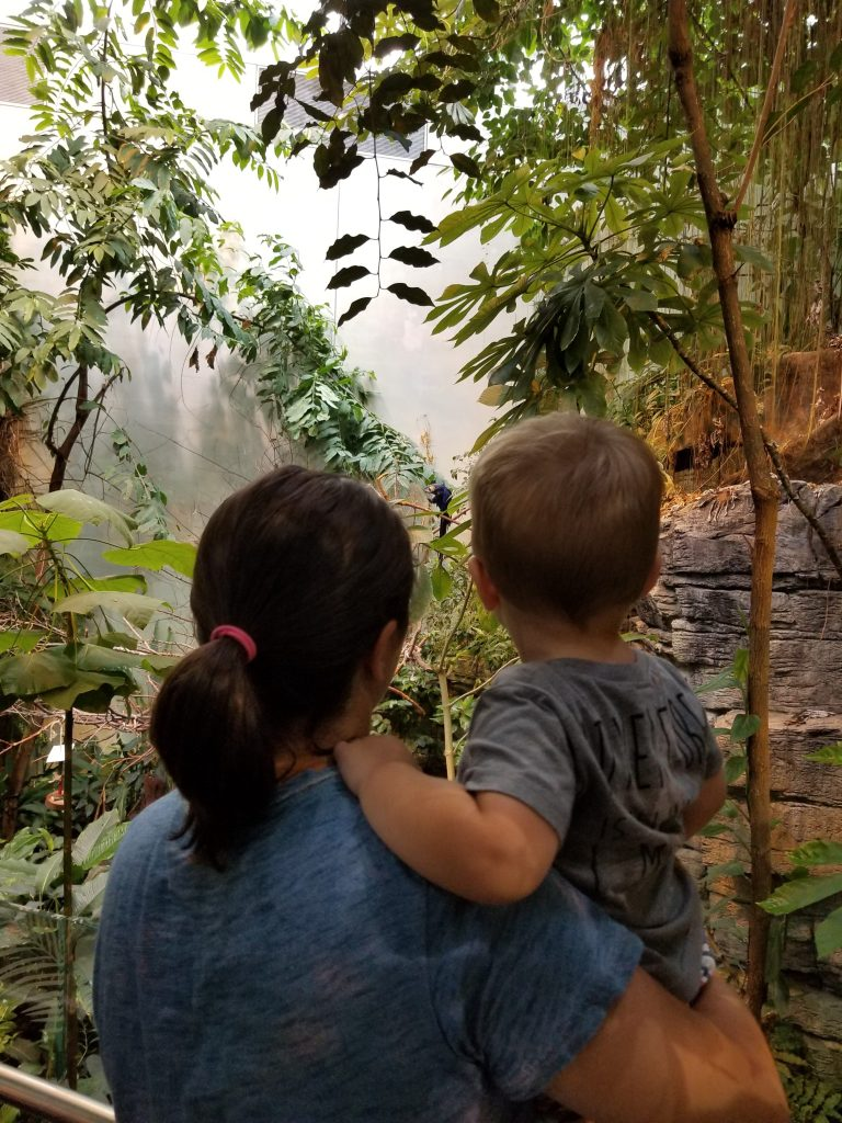 Montreal with a toddler-rain-forest-babycastanonboard.com