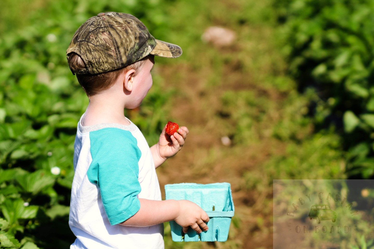 Fun Spring Adventure Strawberry Picking With a Toddler