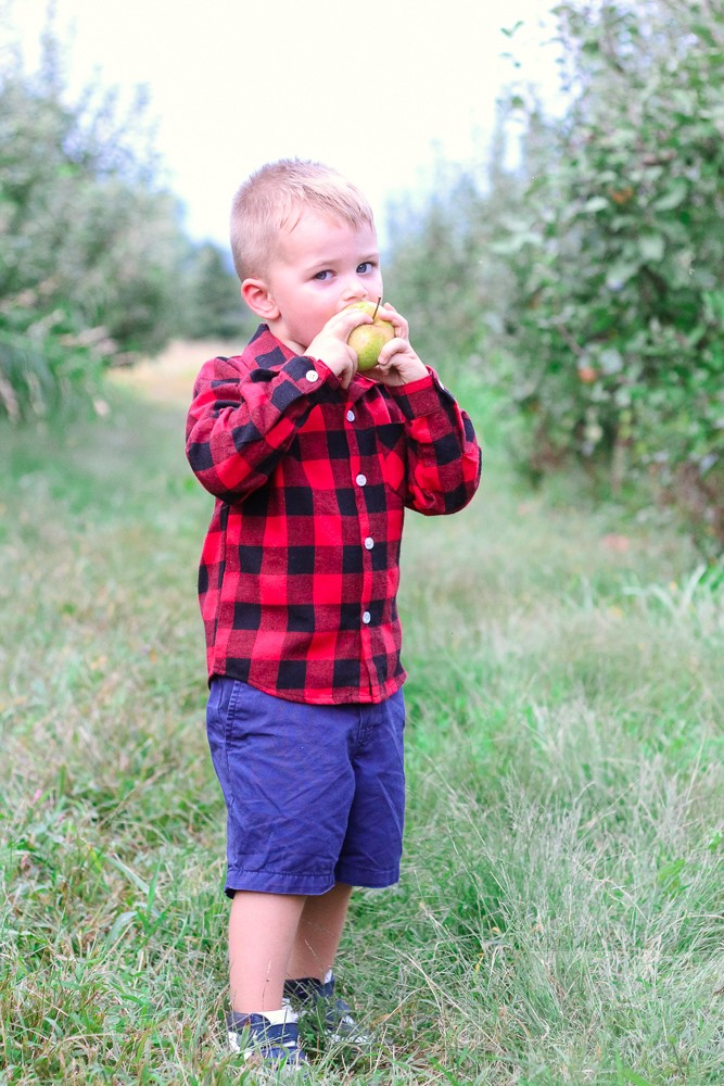 Apple Picking at Great Country Farms and the Best Apple Recipes featured by top DC mommy blogger, Baby Castan on Board