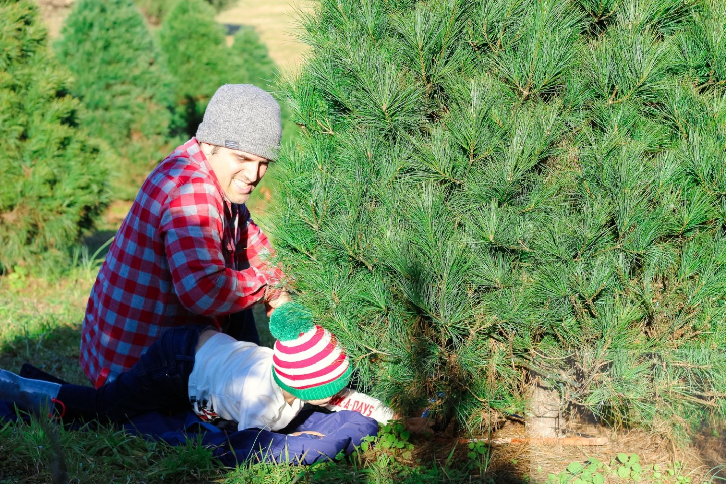 The Top 3 Christmas Tree Farms in Washington DC to Visit featured by top Washington DC blog, Baby Castan on Board: picture of a toddler and his dad at the Moose Apple Christmas tree farm