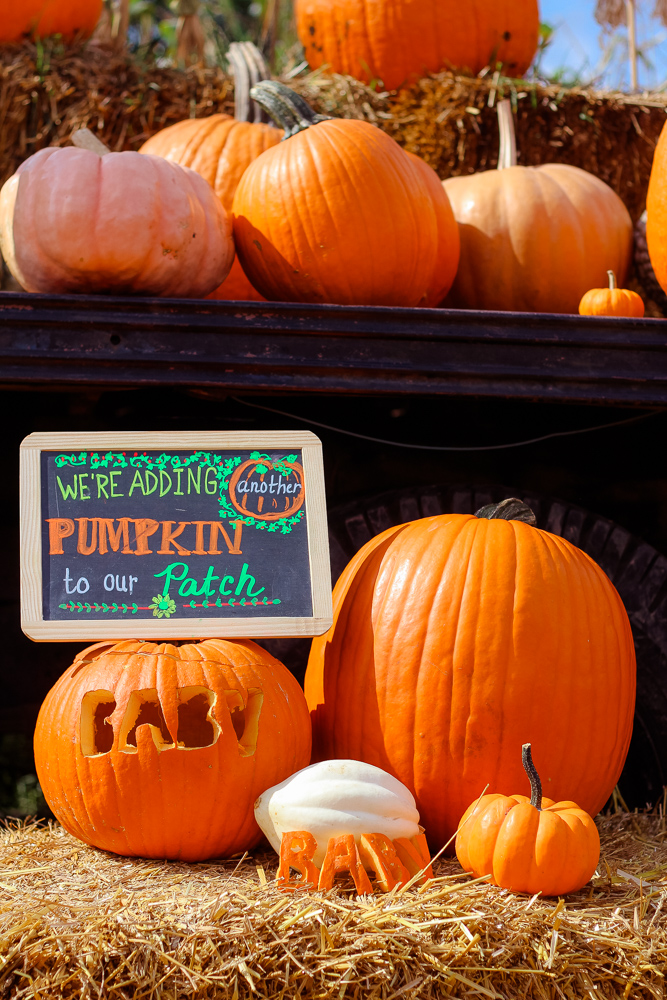 Family   Exciting Update & a Boo-tiful Halloween Pregnancy Announcement! featured by top DC Mommy blogger Baby Castan On Board