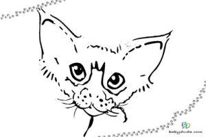 Ausmalbilder Katzen & Kätzchen   Katzenvorlagen   BabyDuda ...