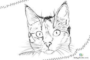 Malvorlage Katzenkopf Kostenlos   Malbild