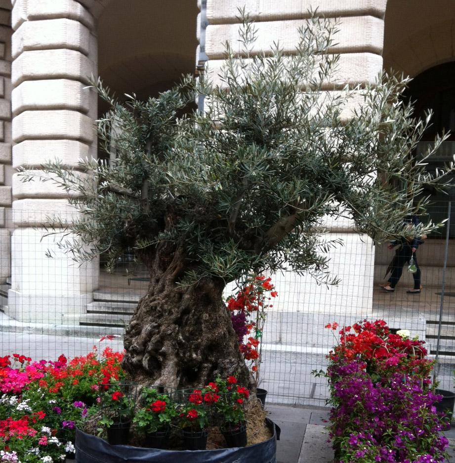Benefici delle foglie di olivo lo studio dellUniversit di Trieste  Baby e le foglie di olivo