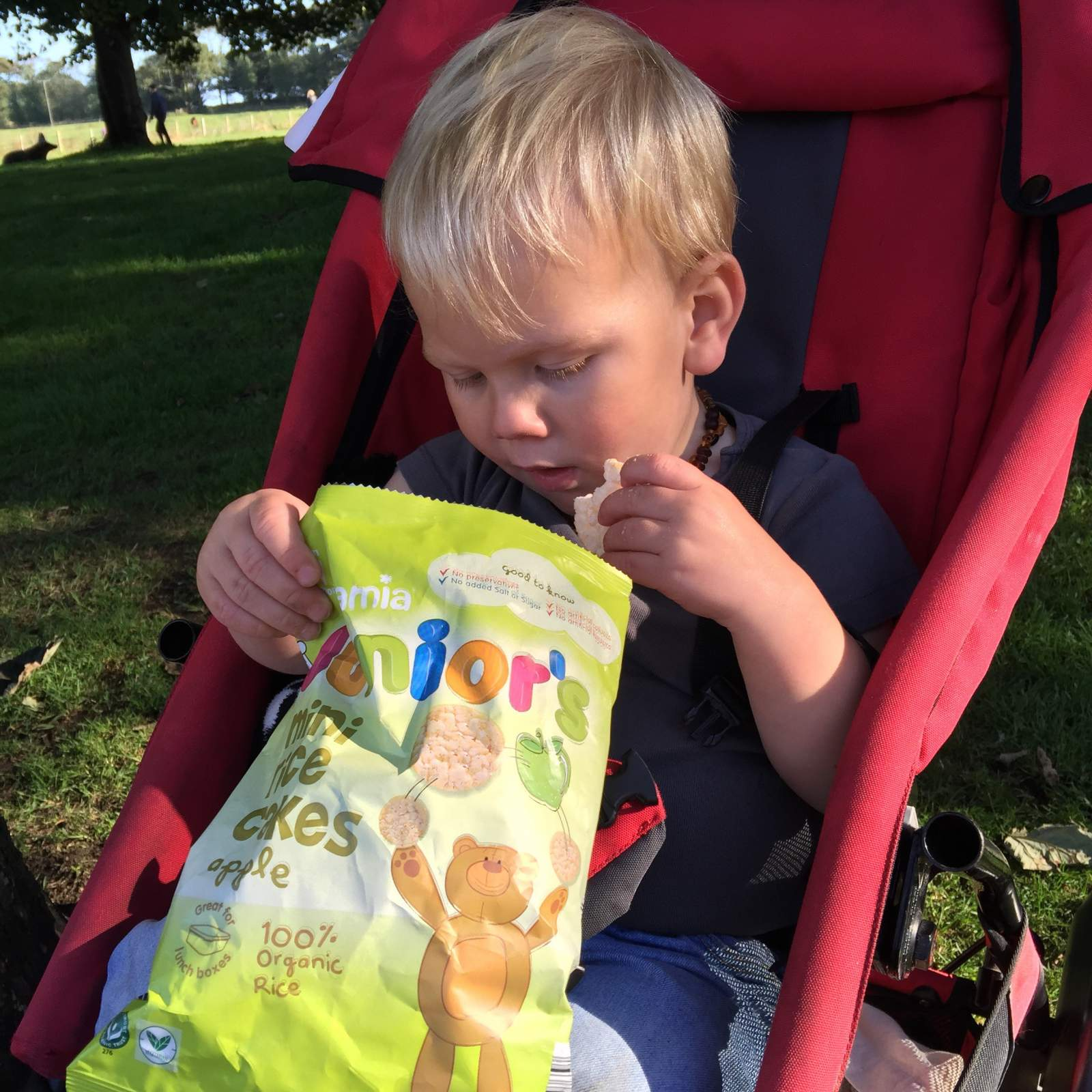 toddler sitting in a pushchair while eating from a bag of Aldi Mamia rice cakes during a day out at Seaton Delaval Hall